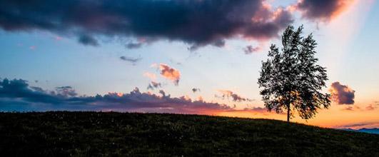 アイキャッチ画像。日が落ちた草原と一本の木(美瑛)。